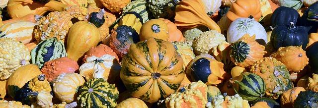 pumpkin-1651969_640